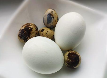 как и сколько варить яйца